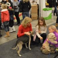 Lycka och Thompa - populära monterhundar