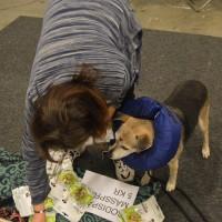 Katarina och monterhunden Lycka