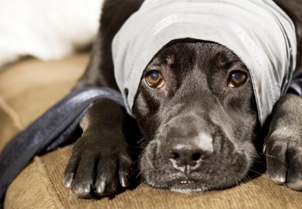 hittehund-livsforsakring